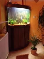 Foto 5 Eckaquarium von der Firma JUWEL zu verkaufen. 190 Liter!!!