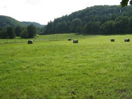 Foto 8 Eifel-Wandern? 2-Bäche-Pfad,  2***Fewo frei.
