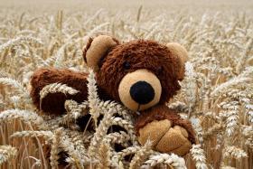 Ein Bär im Kornfeld ...