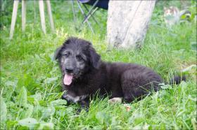 Foto 2 Ein kleines Hundebaby sucht eine große Wiese zum toben