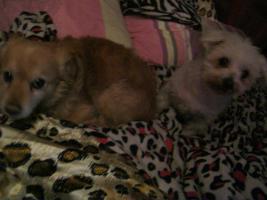 Ein neues Zuhause für 2 tolle kleine Hundeopas.