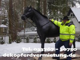 Foto 3 Einfach mal mieten od. kaufen? - Deko Pferd lebensgroß - Modelle - www.dekopferdvermietung.de / Deko Melk Kuh lebensgroß - Modelle - www.melkkuhvermietung.de / Deko Figuren lebensgroß - Modelle - www.dekofigurenvermietung.de ? Tel. / Call. 033767 - 30750