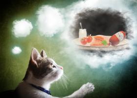 Foto 8 Einladung Ihrer Katze zum KOSTENLOSEN Test-, Festessen