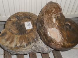 Foto 11 Einmalige Gelegenheit! Fossilien, Edelsteine, Edelsteinschmuck-Sammlung aus Geschäftsaufgabe
