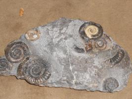 Foto 13 Einmalige Gelegenheit! Fossilien, Edelsteine, Edelsteinschmuck-Sammlung aus Geschäftsaufgabe