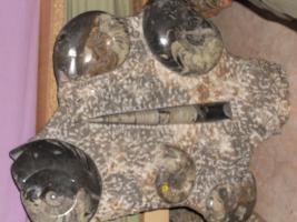 Foto 17 Einmalige Gelegenheit! Fossilien, Edelsteine, Edelsteinschmuck-Sammlung aus Geschäftsaufgabe