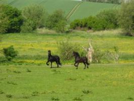 Einstellplätze für Pferde