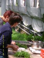 Erlebnis-Kräuterkurs am 23.07.2011