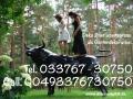 Event geplant und Du suchst ne Deko Kuh oder Deko Horse oder Deko EL TORO ?