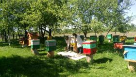 Foto 5 Existenzgründung Obstanlage mit Bienenvölkern