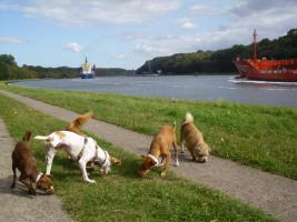 Nord-Ostsee-Kanal, kilometerlange Wanderwege