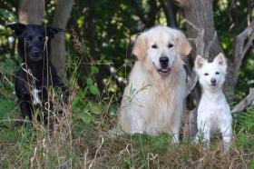 Eingezäunter Hundewald