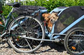 2 Hunde-Fahrradanhänger für Hunde bis 20kg