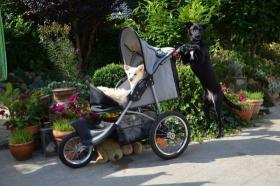 Hunde-Buggy für Hunde bis 15kg, für bewegungseingeschränkte Hunde