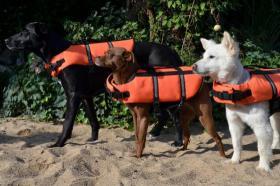 Hunde-Schwimmwesten