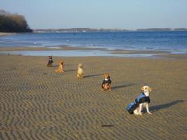 Hunde-Training nach Absprache möglich