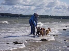 Hunde-Sitting nach Absprache möglich
