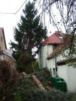 Foto 3 Fällung ihrer Bäume