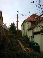 Foto 4 Fällung ihrer Bäume