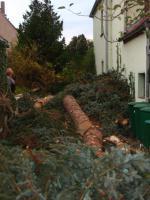 Foto 5 Fällung ihrer Bäume