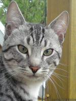 Foto 3 Felix seit 15.11.09 vermisst - FINDERLOHN-