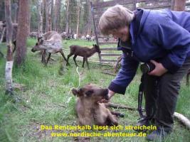 Foto 5 Ferienhaus Brännmyra mit Kamin, Sauna und Hund in Lappland/Schweden für grosse Familien