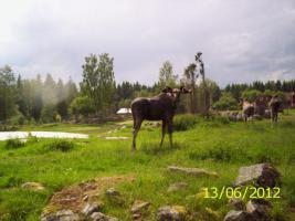 Foto 13 Ferienhaus in Schweden , Sauna, Boot u. freies Angelrecht