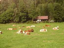 Foto 2 Ferienhütten in der Steiermark