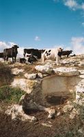 Foto 8 Ferienwohnung SIZILIEN in Modica UNESCO-Weltkulturerbe Provinz Ragusa
