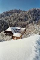 Foto 10 Ferienwohnung auf dem Schwarzwaldhof, ruhige sonnige Lage