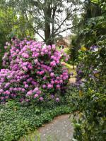 Foto 5, blühender Garten, FeWo Heideparadies Bispingen