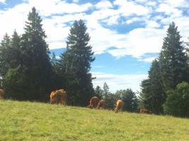 Foto 13 Ferienziel Berge in Bayern - Bergpension Maroldhof