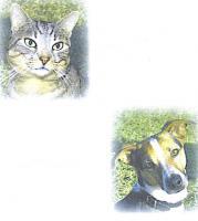 Feucht und Trockenfutter für alle Hunde- und Katzenrassen