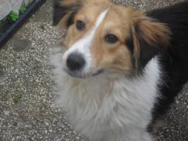 Fiodor, 8monate, davon 6 im Tierheim