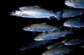 Fischzucht Investition