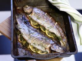 Foto 3 Fischzucht Investition