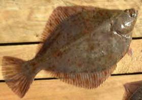 Foto 4 Fischzucht Investition