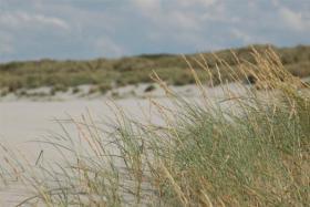 Foto auf Leinwand Strand Ameland 90x60 cm Versand kostenlos