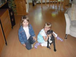 Foto 2 Französische Bulldogge