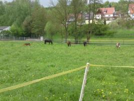 Foto 2 Freie Pferdeboxen