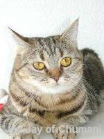 Foto 4 Freier Katzenverein