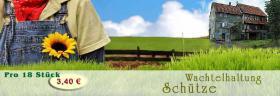 Frische Wachteleier aus Nordhessen