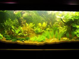 Für mein 300 Liter Aquarium Co2-Anlage gesucht