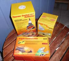 Foto 2 Futter für Landschildkröten & Futterpflanzen und Saatgut