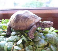 Foto 12 Futter für Landschildkröten & Futterpflanzen und Saatgut