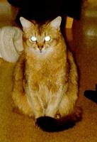 Foto 2 Futterservice für Hund und Katz'