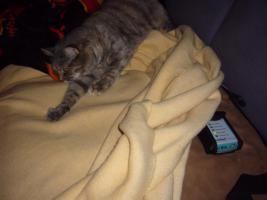 Foto 3 Futterservice für Hund und Katz'