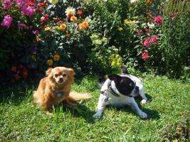 Foto 4 Futterservice für Hund und Katz'