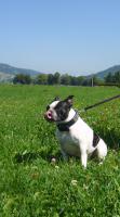 Foto 6 Futterservice für Hund und Katz'
