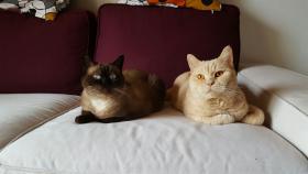 Fynn und Fiona suchen neues Schmusepersonal